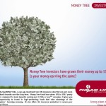What's Money Tree?